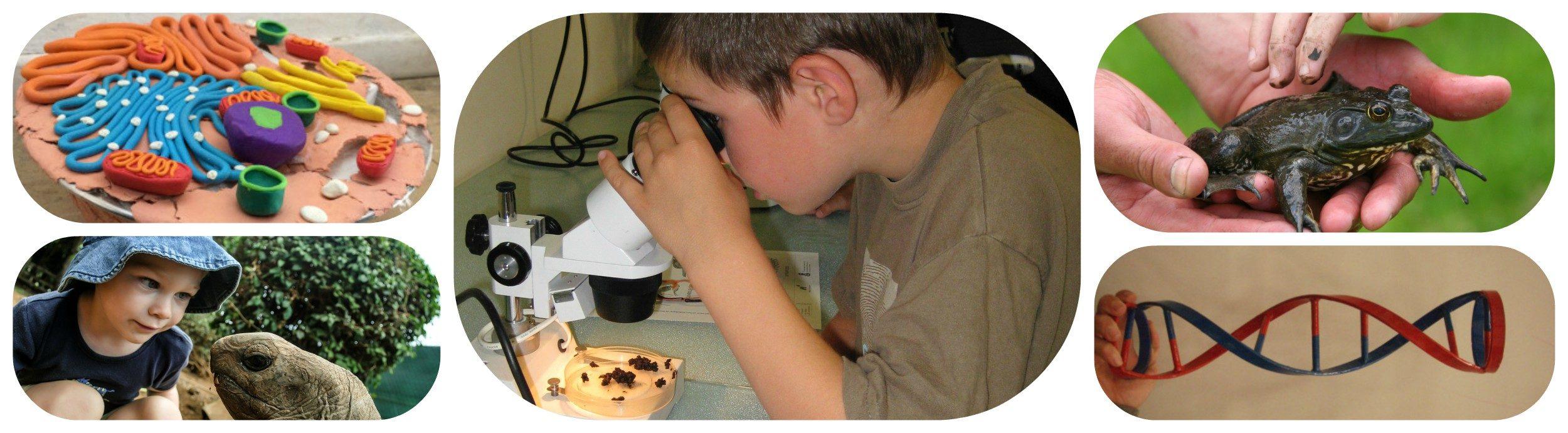 Η Βιολογία στην Εκπαίδευση